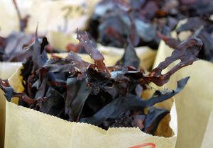 seaweed1